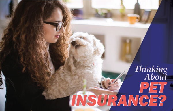 Pet Health Insurance Options - Kimberling Animal Hospital