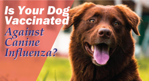 Is Your Dog Protected Against Canine Influenza
