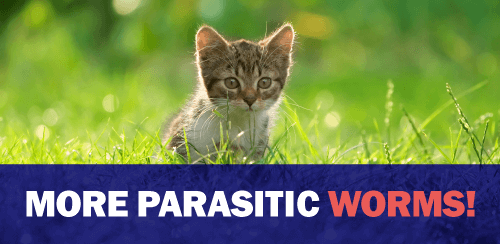 More Parasitic Worms!