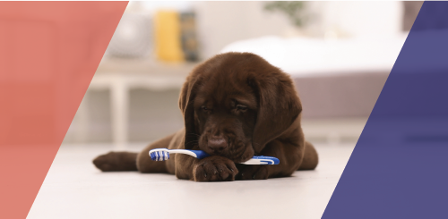 Brush Up On Your Pet's Dental Health Now!