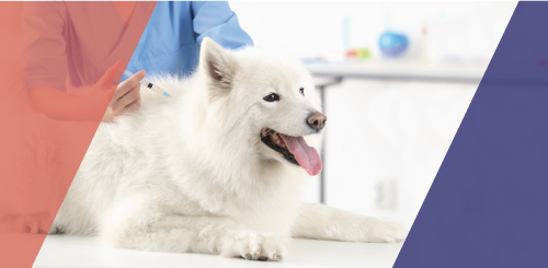 What Vaccinations Does Your Pet Really Need?